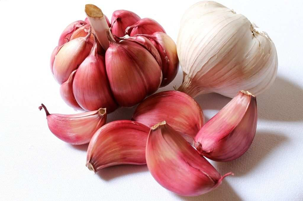 garlic as home remedy for dandruff.